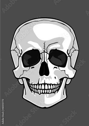 Illustration of a skull isolated on grey
