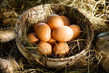 Organic brown eggs in straw