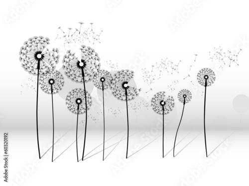 dandelion © dervish77