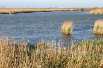 delta del po sacca di goro