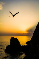 Seagull over coastline with hills in silhouette