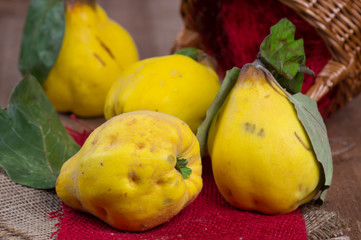 Yellow quinces out of a basket