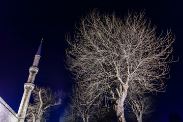 Grey leafless tree and a minaret of Blue mosque at night