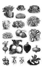 Vegetables - Légumes - Gemüse - 19th century