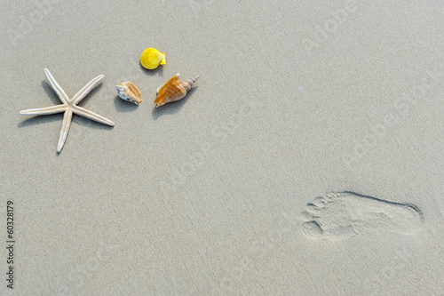 Overhead view of  starfish and shell on background of sand