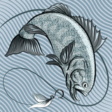 The fish in grey