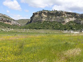 Meadows landscape in Lleida