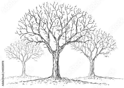 alberi spogli © robodread