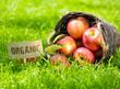 Fresh organic apples in a basket