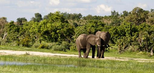 Elefantenpärchen am Wasserloch