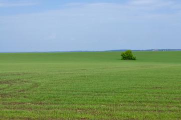 Sown field