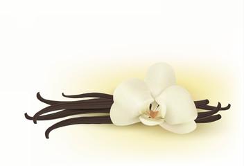 Vanilla. Vector.