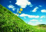 Beautiful Green Meadow