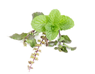 basil (tulsi) and mint in group on isolated white