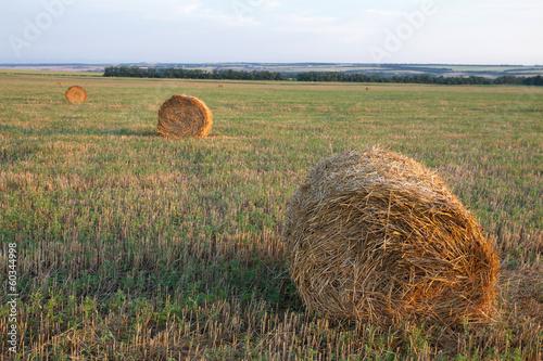 Leinwandbild Motiv haystacks field