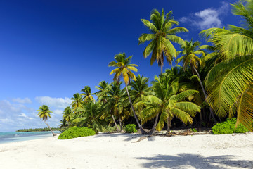 Caribbean wild beach, Punta Cana