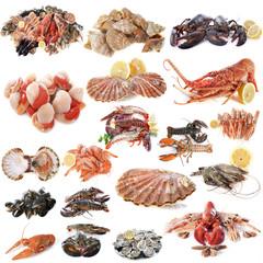 seafood and shellfish