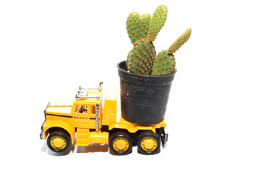 cactus on toy car the truck isolated on a white background