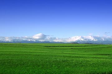 campo verde con cielo azul y montañas nevadas