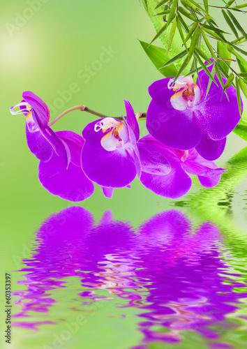 composition végétale et florale, orchidée, bambou