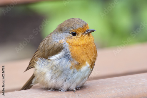 Robin perches on seat.