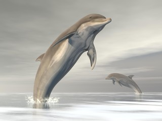 Freedom of the dolphins - 3D render