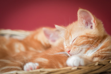 sleeping kittens in a basket with space for text