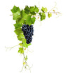 Collage of vine leaves and blue grapes