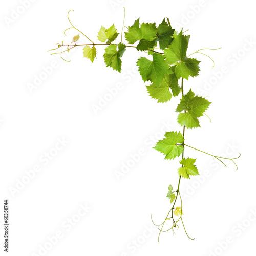 Papiers peints Vegetal Collage of vine leaves