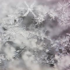 real macro snowflakes lying a handful