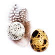 Two  Quail Eggs with feathers isolated on white background, macr