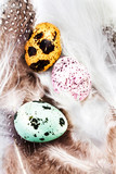 Group of Colored Quail Eggs with feathers macro. HQ photo of qua