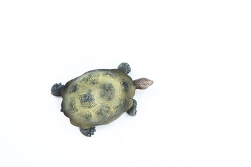 turtle view from above