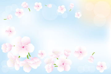 Hanami - Cherry blossoms background