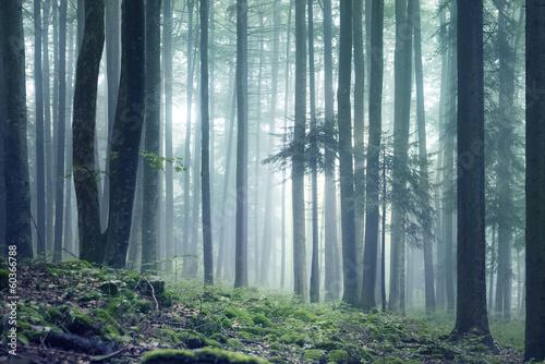 Forest landscape - 60366788