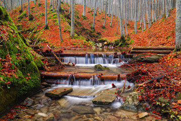 stream with jumps in the wood in autumn