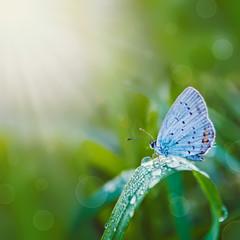 fototapeta piękny motyl na łące w słońcu