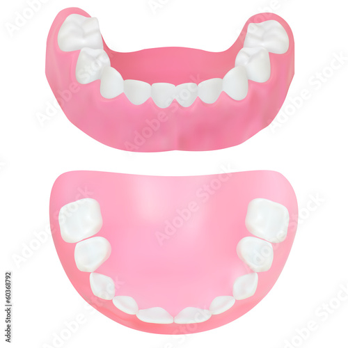 Set of Teeth of the lower jaw. Vector illustration