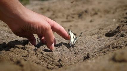 Butterfly(M Papilio Podalirius ),  swallowtail,  on sand