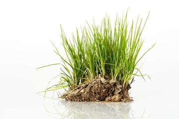 Cespuglio d'erba