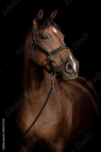 Horse Portrait © krappweis
