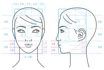 女性の顔と黄金比