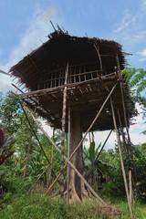 Traditional Koroway house on the tree