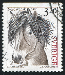 North sweden horse
