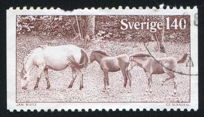 Gotland Ponies