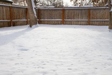 Backyard of snow