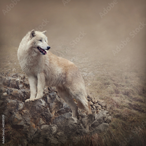 Foto op Canvas Wolf White wolf at the night