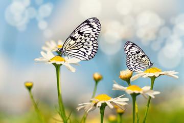 Blumenwiese mit Schmetterlingen
