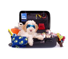 Welpe im Reisekoffer mit Hundezubehör