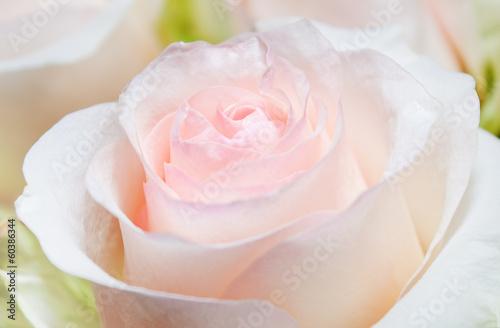 rose bud © Rublov